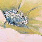 canh hoa poppy m546-2