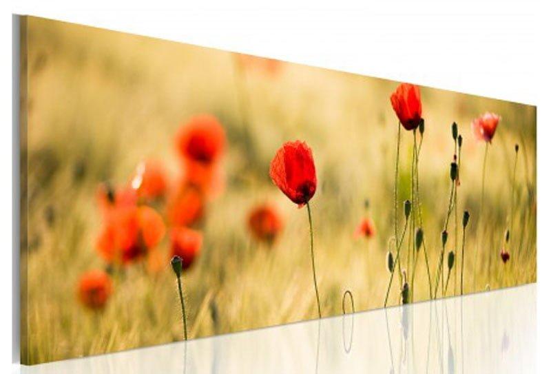 canh hoa poppy m549-1