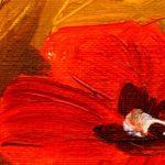 canh hoa poppy m551-2
