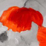canh hoa poppy m553-2
