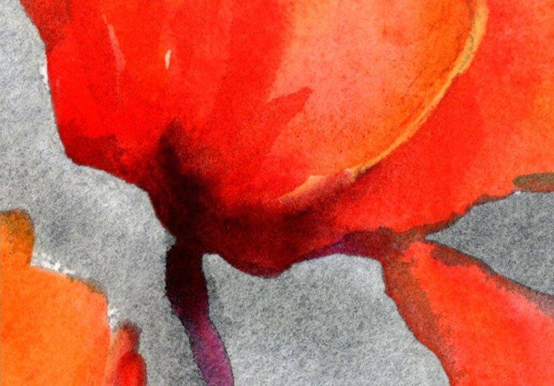 canh hoa poppy m555-4