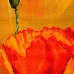canh hoa poppy m578-2