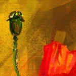 canh hoa poppy m578-3