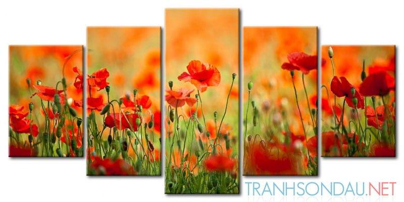Cánh Hoa Poppy M579
