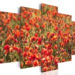 canh hoa poppy m580-1
