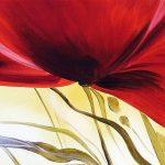nhung canh hoa poppy m518-2