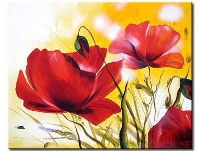 nhung canh hoa poppy m518