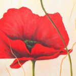 nhung canh hoa poppy m542-2