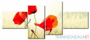 Những Cánh Hoa Poppy M573