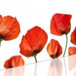 nhung canh hoa poppy m574-1