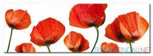 Những Cánh Hoa Poppy M574
