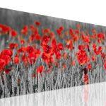 nhung canh hoa poppy m575-1