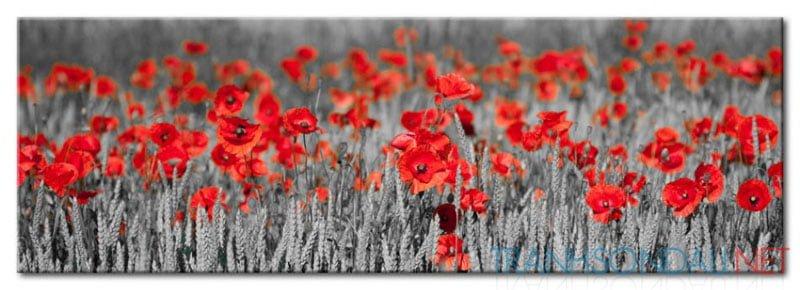 Những Cánh Hoa Poppy M575