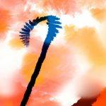 nhung canh hoa poppy m577-3