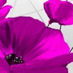 poppy khoe sac m516-2