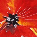 poppy khoe sac m522-1