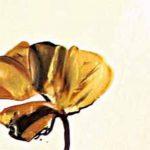 poppy khoe sac m530-1