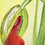 poppy khoe sac m532-1