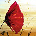 poppy khoe sac m533-1