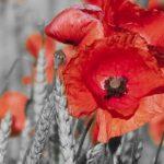 poppy khoe sac m539-2