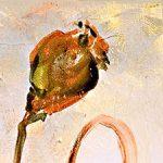 poppy khoe sac m559-2