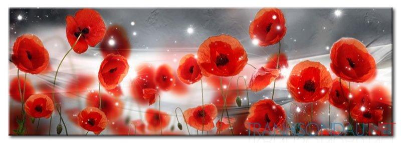 Poppy Khoe Sắc M562