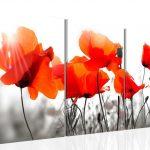 poppy khoe sac m563-1