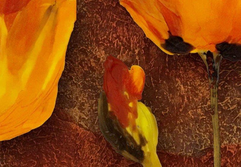 poppy khoe sac m566-1