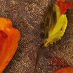 poppy khoe sac m566-2