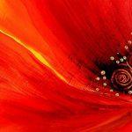 poppy khoe sac m567-2
