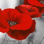 poppy khoe sac m570-3