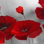 poppy khoe sac m570-4