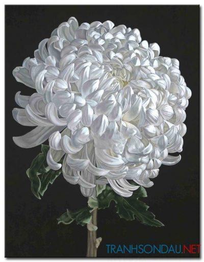 Hoa Cúc Trắng M847