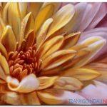 Những Cánh Hoa Khoe Sắc M854