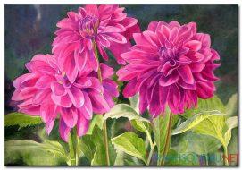 Hoa Cúc Khoe Sắc M860