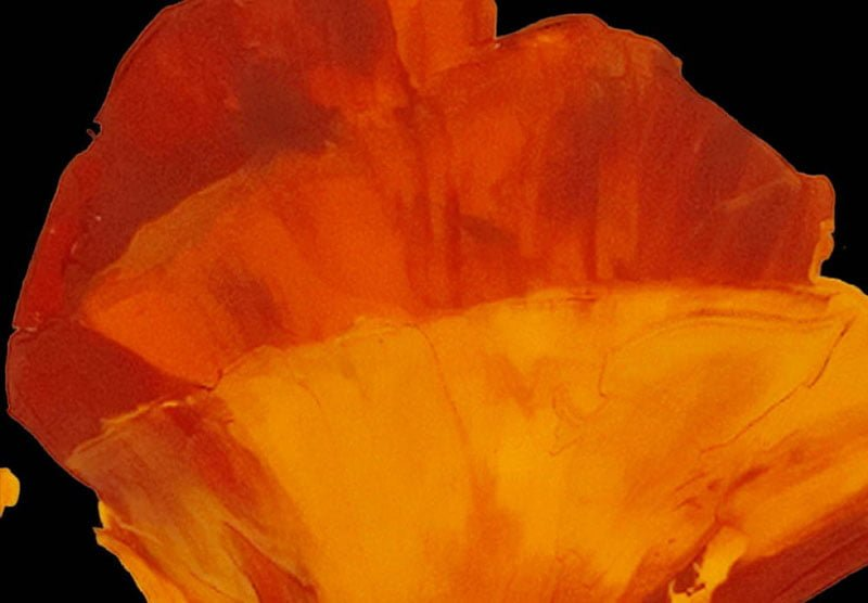 hoa poppy m2195-1