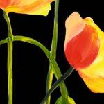 hoa poppy m2196-1