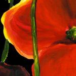 hoa poppy m2196-2
