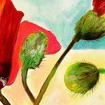 hoa poppy m2203-2