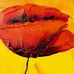hoa poppy m2205-2