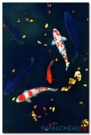 Cá Chép M1749