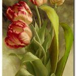 Tulip Khoe Sắc M1242