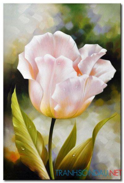 Tulip Khoe Sắc M1246