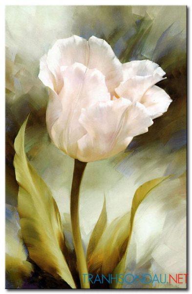 Tulip Khoe Sắc M1251