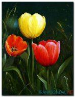 Tulip Khoe Sắc M1261