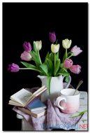 Tulip Khoe Sắc M1273