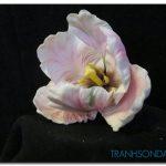 Những Cánh Hoa Khoe Sắc M1280