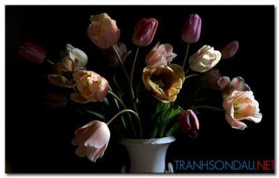 Tulip Khoe Sắc M1284