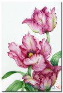 Tulip Khoe Sắc M1304