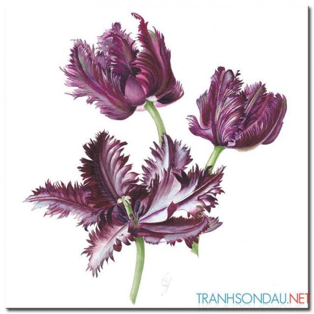 Những Cánh Hoa Khoe Sắc M1308